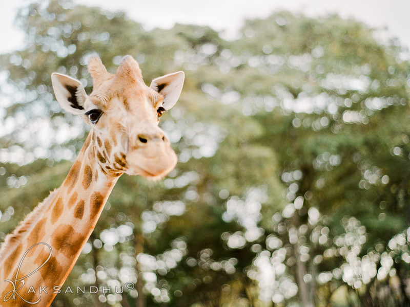 Safari-Africans-161.jpg