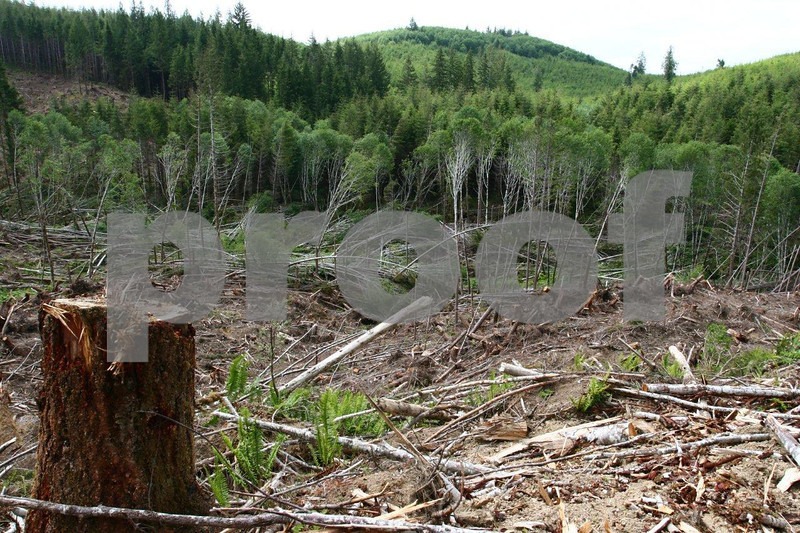 Dec. 2, 2007 hurricane force winds that exceeded 120mph blew down large areas of forests in the WA coast range.