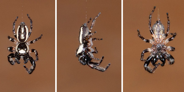 Sept. 15, 2013 - Spiders