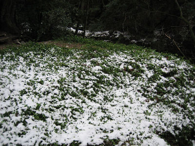 Mt. Wilson Trail 3-12-06