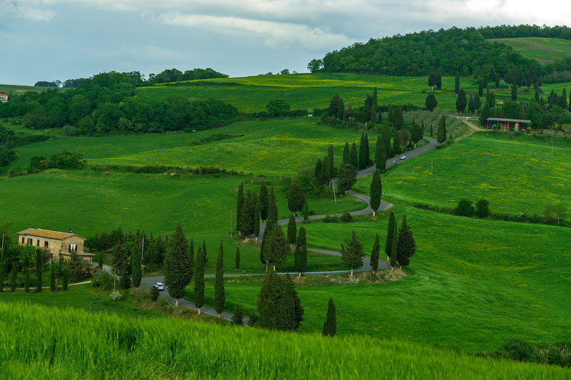 Typical Tuscan Cypress trees