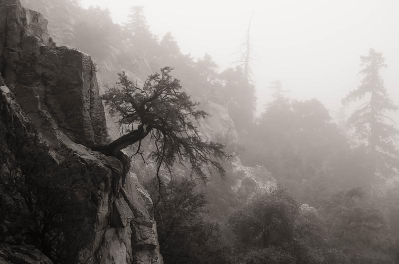 treeonsideofhill.jpg