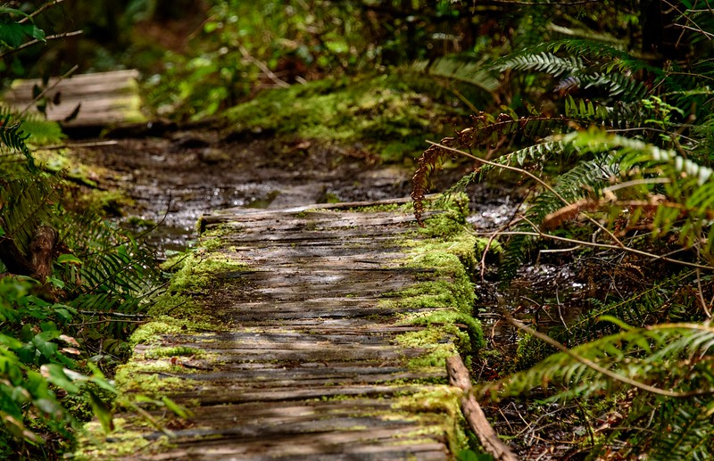 Pathway to  fairyland