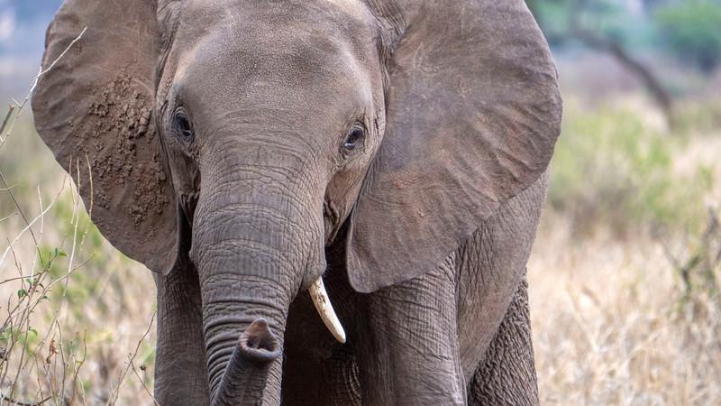 Tanzania-Tarangire-National-Park-Safari-Elephant-02.jpg