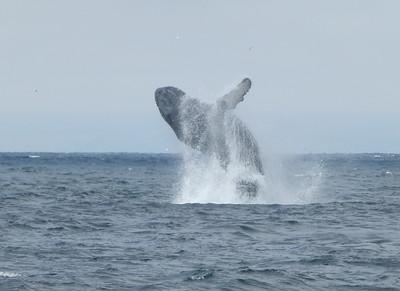 Monterey Bay 2014