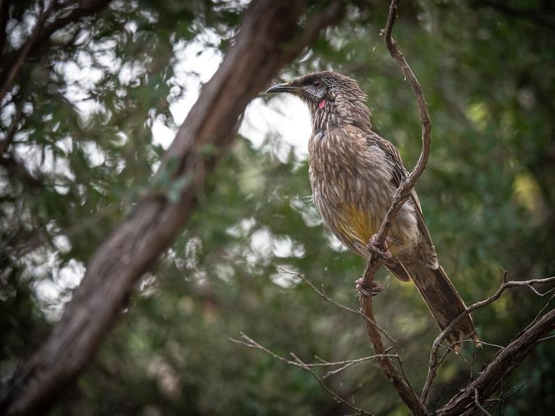 birds  000126.JPG