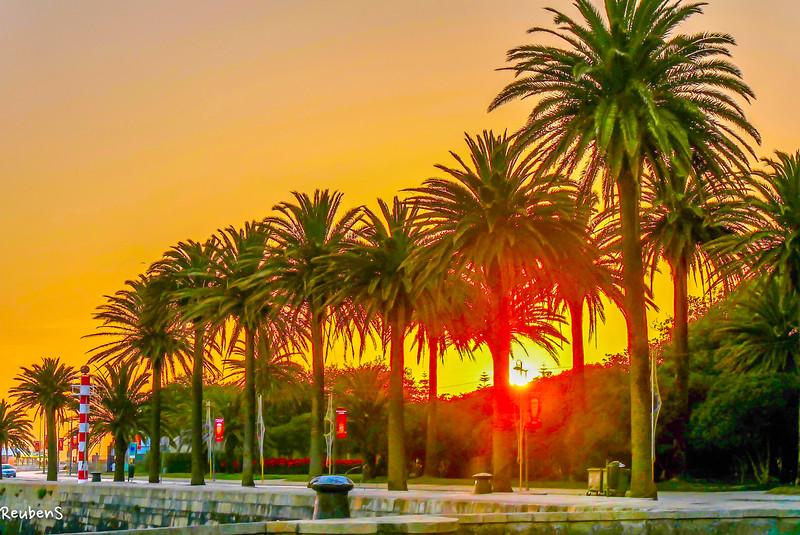 Sunset palms, Porto.jpg