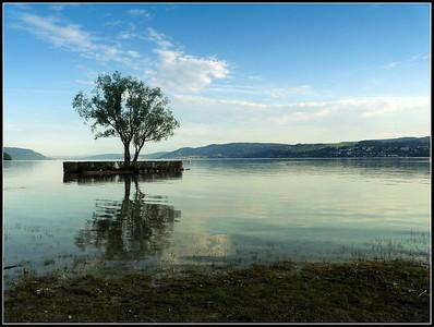 Bodensee Lake 1/2