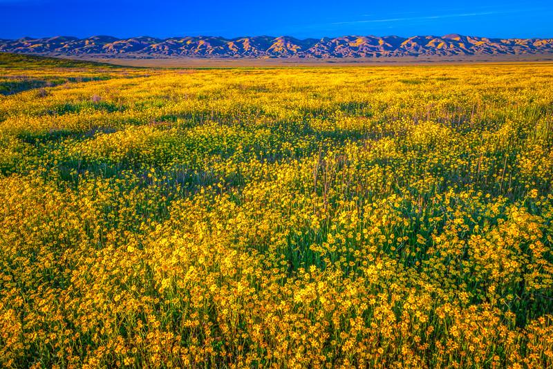 Carrizo Plain National Monument Wildflowers Superbloom Spring Symphony 14!  Elliot McGucken Fine Art Landscape Nature Photography Prints & Luxury Wall Art