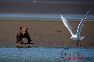 Alaska 2015 Photo Safari
