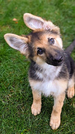 Storm The GSD