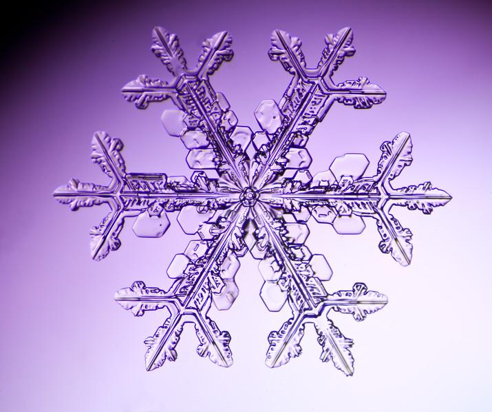 snowflake-3026-Edit-2.jpg