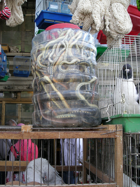 snakes in a jug at a streetside petshop, Damascus