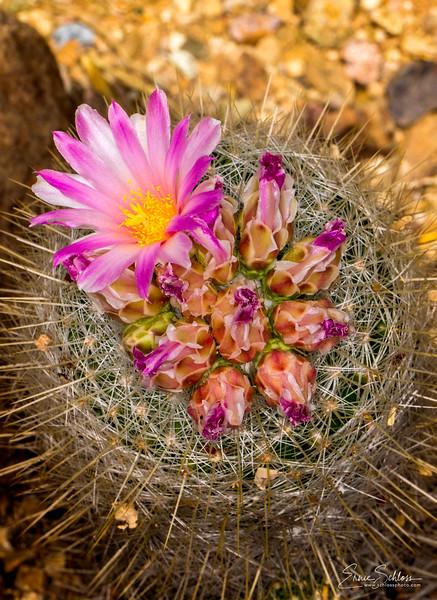 TBG cactus 3-11-2018b-4254.jpg