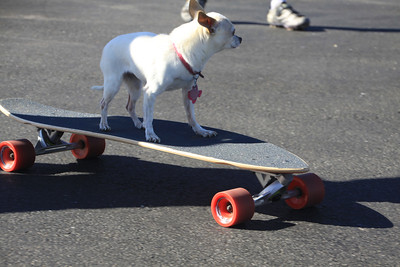 Lucy-on-Skateboard