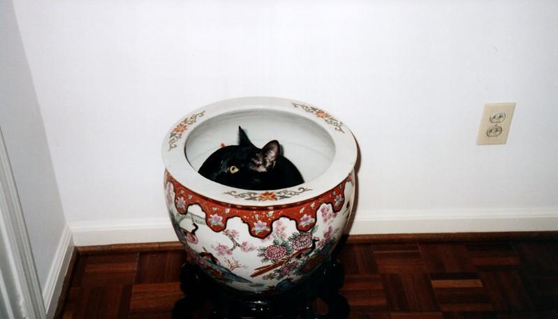 2000_April_More_Cats_0006_a.jpg