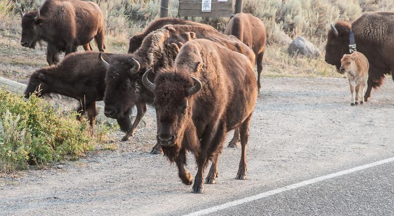 Yellowstone-8828.jpg
