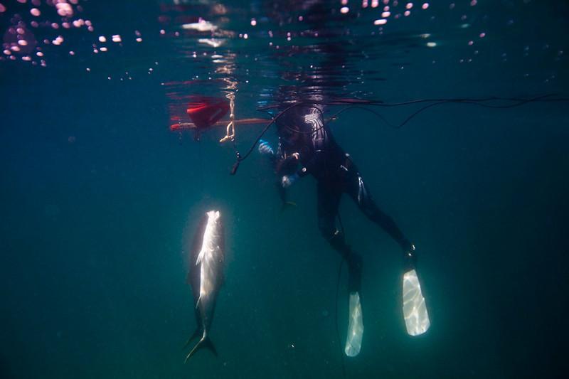20090420_Underwater_Mexico_0293.jpg