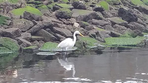 2015-06-18_Birds