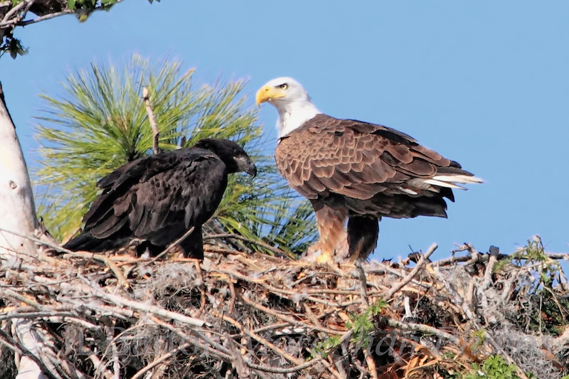 Mama and Fledgling