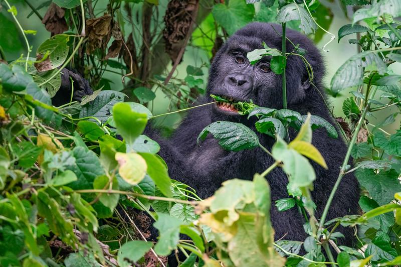 Uganda_T_Gor-2185.jpg