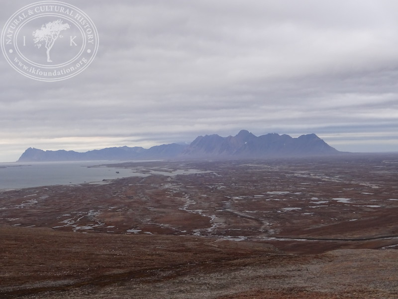 Searching for ptarmigan on Donaldhumpane, overlooking Forlandsletta and the northern mountains of Prins Karls Forland.