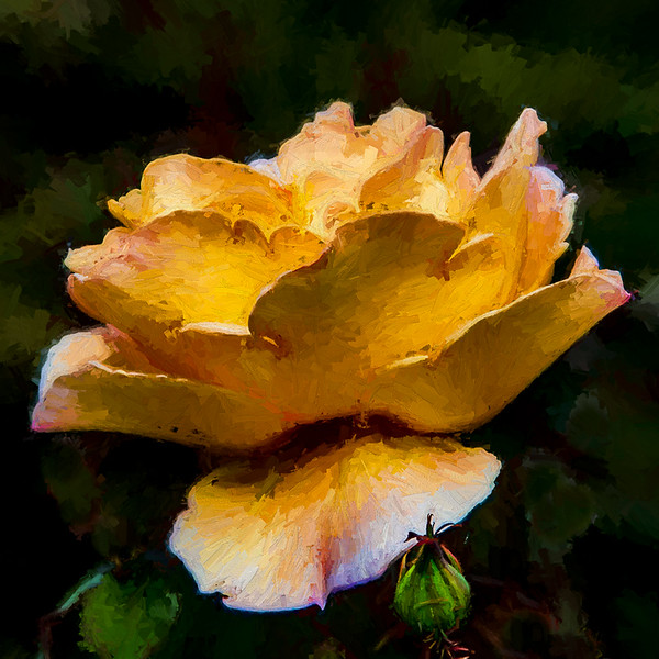 October 6 - A green bud, a green leaf and a yellow rose.jpg