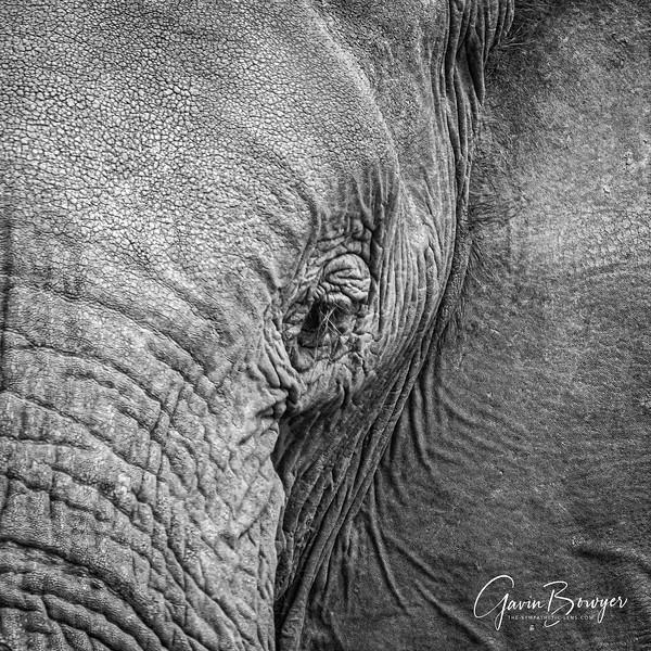 Elephants Botswana-2.jpg