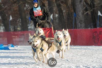 2-1-15 Loppet Sunday - Subaru Dogsled Loppet