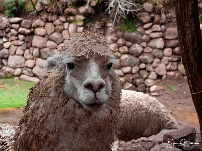 Peru-18102019-846.jpg