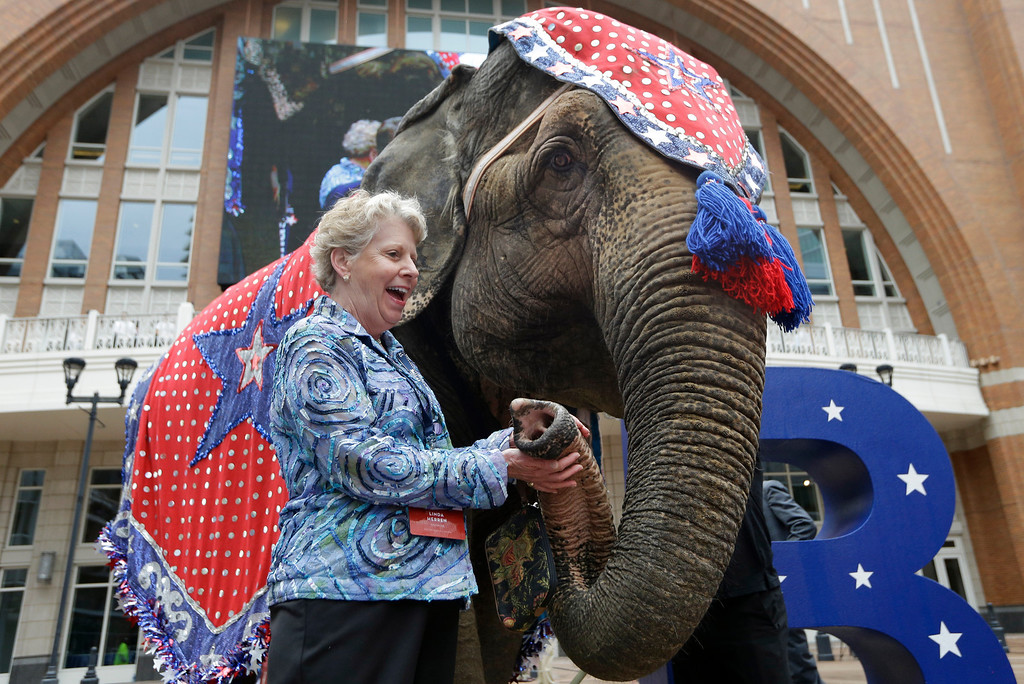 . Linda Herren, Republican National Committeewoman from Georgia, holds an elephant\'s trunk in front of the American Airlines Center during a visit by members of the Republican National Committee scouting a 2016 Convention host site in Dallas, Thursday, June 12, 2014. American Airlines Center would serve as the convention site if Dallas\' bid is successful. Dallas is competing with Denver, Cleveland and Kansas City. (AP Photo/LM Otero)
