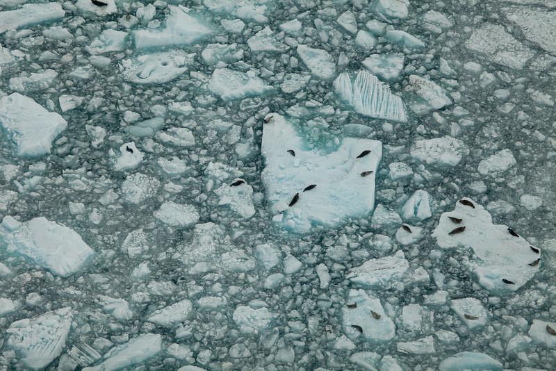 Alaska Icy Bay-3914.jpg