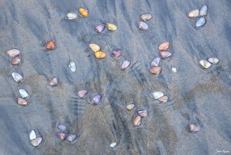 Coastal Gems
