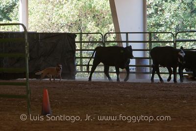 FRI 30 Sep Herding Test & Trial 1