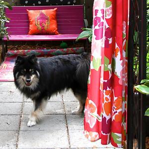 Sandra's Garden 2014