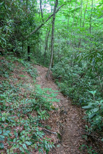 Greasy Cove Trail -- 4,240'