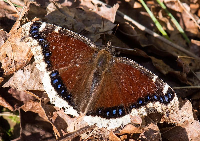 Butterfly 19.jpg