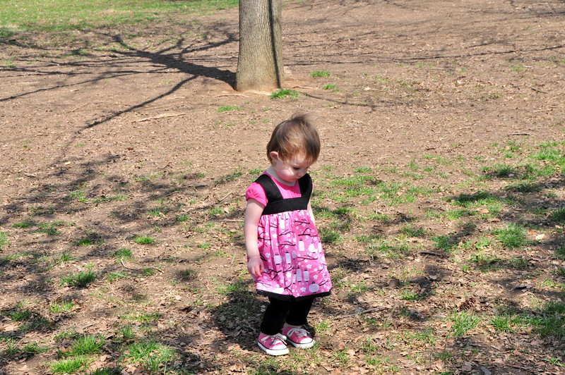 Cherry Blossoms 2014 055.jpg