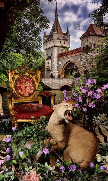 enchanted castle.jpeg