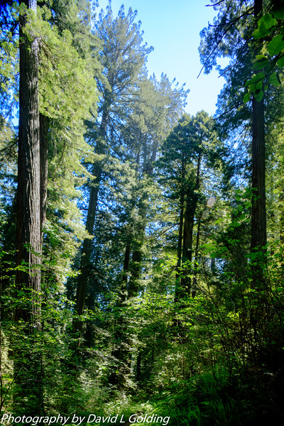 Prarie Creek Redwoods State Park (CA) Collection