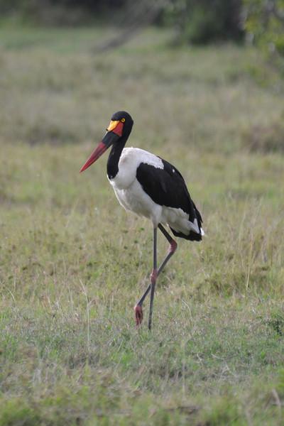 East Africa Safari 21.jpg
