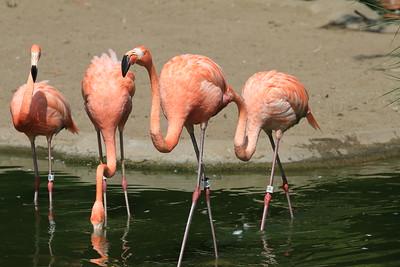 Zoo Wading Birds