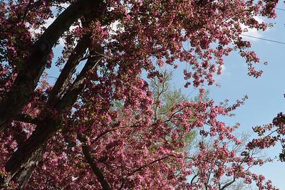 Springtime and Syd