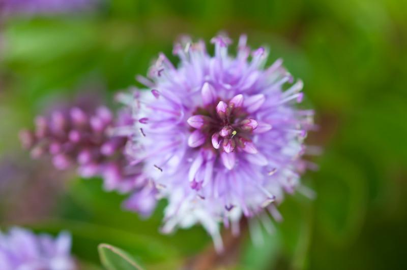 Flower Macro (2010-05-09)