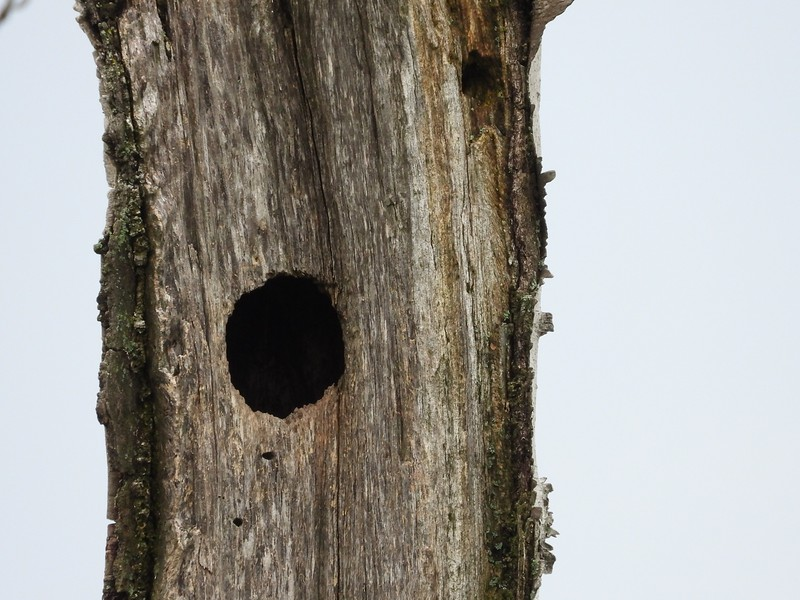 Nesting cavity - activity and species unknown