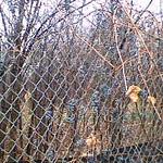 Walking To Work, November 6, 2008