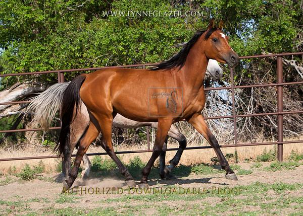 Cowgirl38-3030.jpg