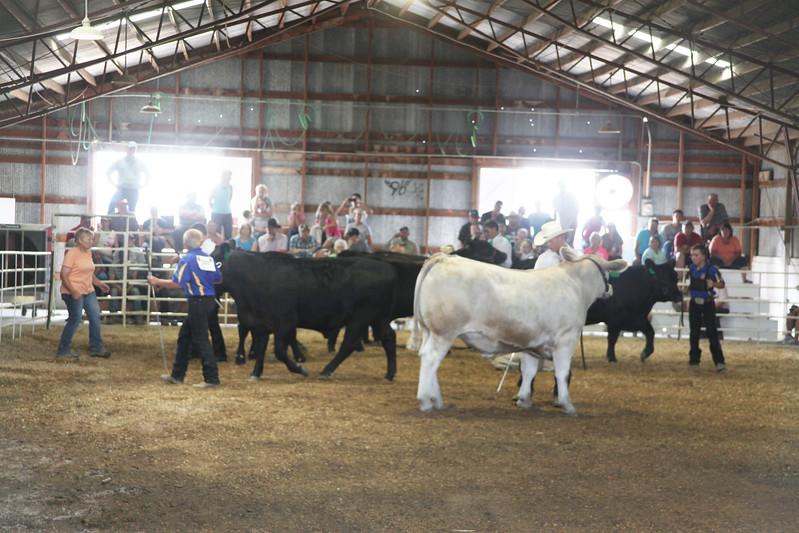 Havre Daily News / Floyd Brandt  4H / FFA Senior Beef Showing Blain County Fair Saturday,