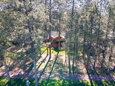 3207 Deep Forest