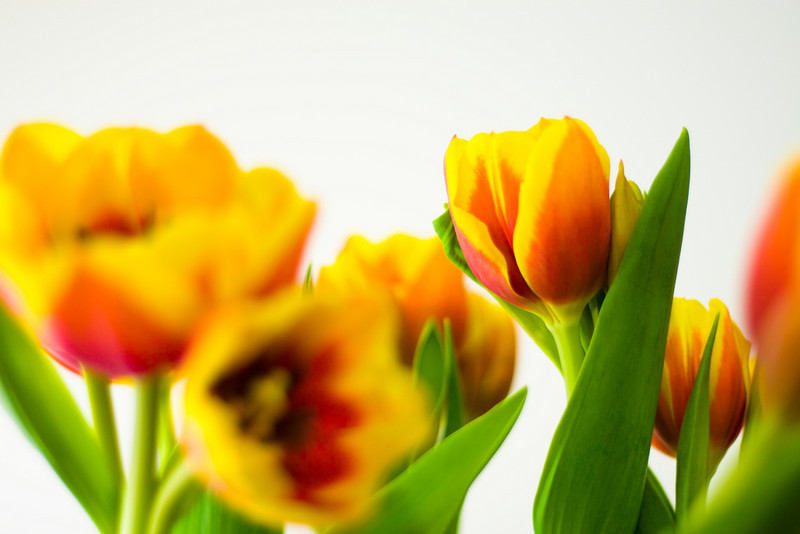Tulip Light Box_09.jpg